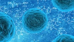 stem-cell450